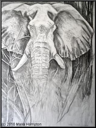 Elephant: Prints