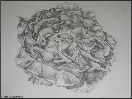 Rose-print